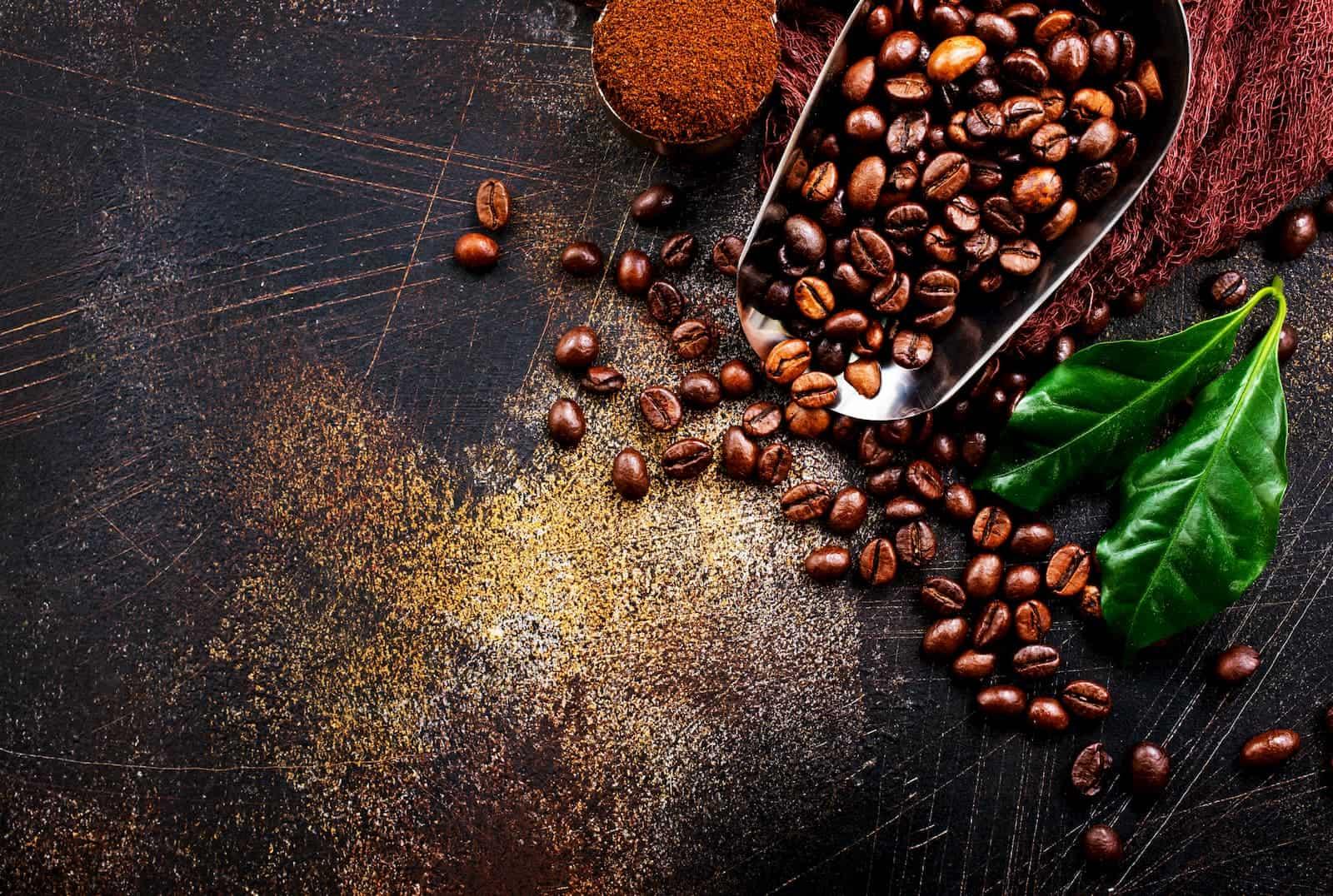 grãos de café colhidos