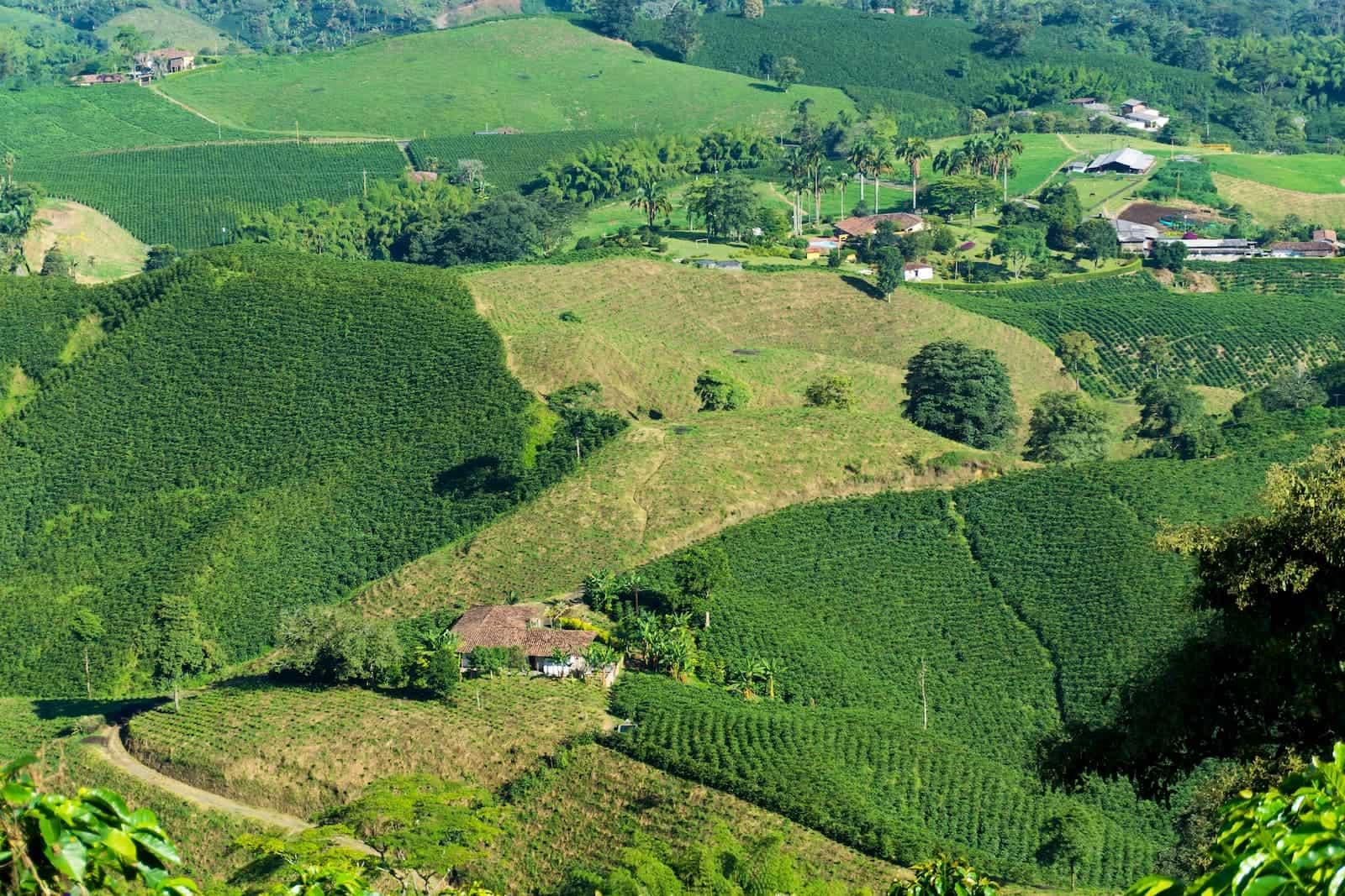 fazendas cafeeiras de café na colômbia
